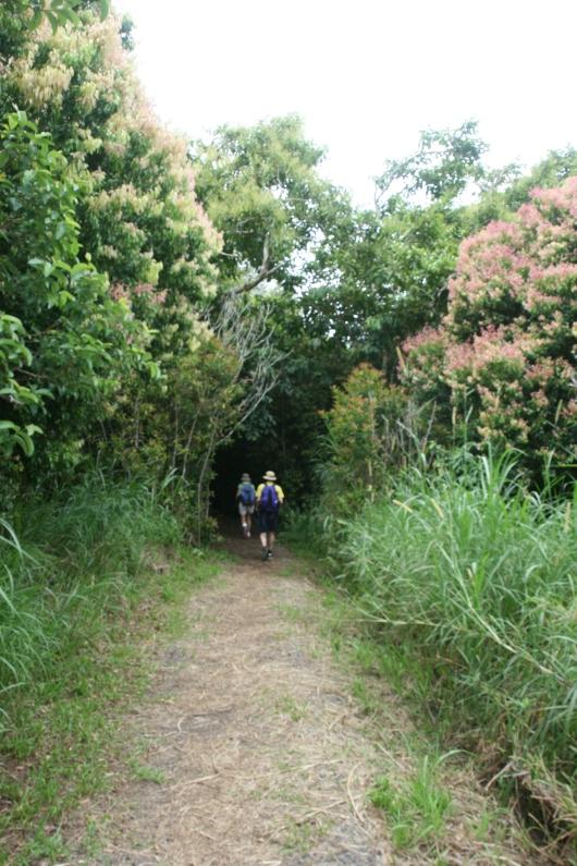 Entering Maunalei Arboretum