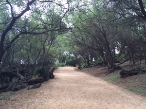 Trail from parking lot to Big Beach